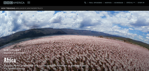 Beispiel WordPress Webseite BBC America